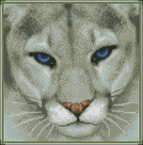 Пума с голубыми глазами