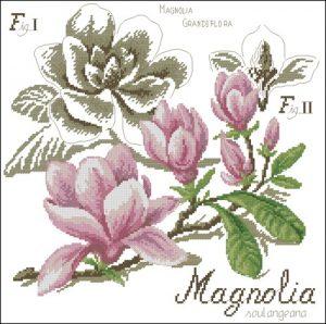 Flower&shadow-magnolia