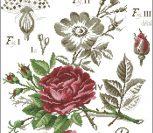 Flower&shadow-rose