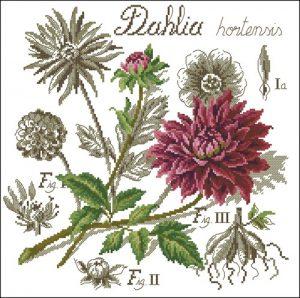 Flower&shadow-Dahlia