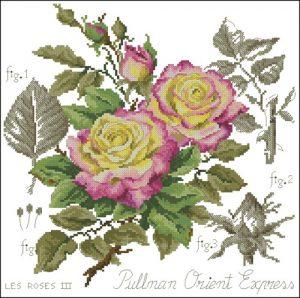 Ботаника розы