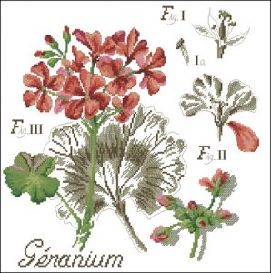 Flower&shadow-geranium