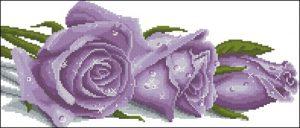 Фиолетовая роза в росе