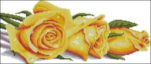 Розы в росе (желтые)