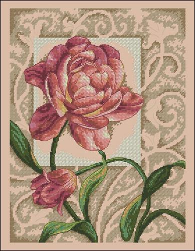 Graceful Tulip