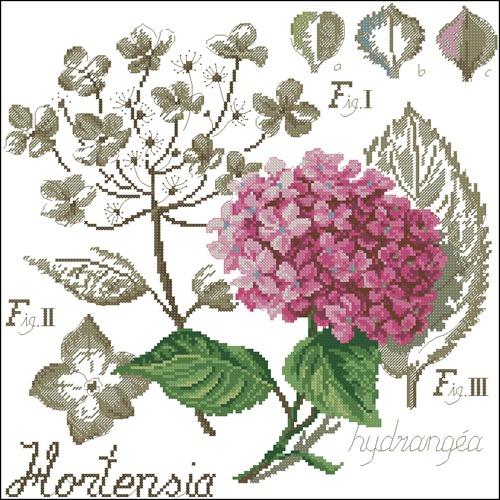 Etide Botanique - Hortensia