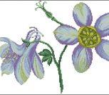 Fleurs - Mussen