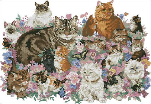 DIM Cat Family