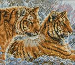 Амурские тигры