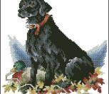 Лабрадор (черный)