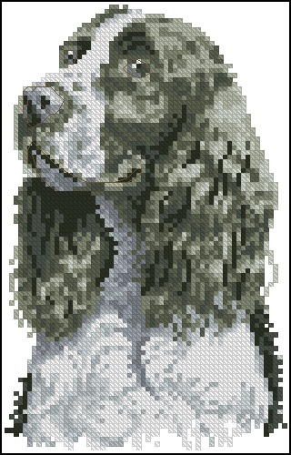Springer Spaniel (BK 137)